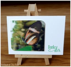 butterflies05